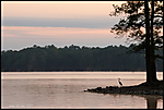 lake-allatoona-herring.jpg