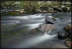 little-river-01.jpg