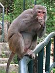 monkey-business-mini1.jpg