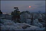moon-omd-03.jpg