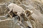 sheep007_filtered.jpg