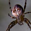 spider21.jpg