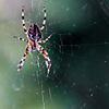 spider8.jpg