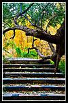 staircaseyellowtree.jpg