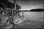 tree-roots.jpg