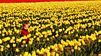 tulips3croppedforphotoreview.jpg