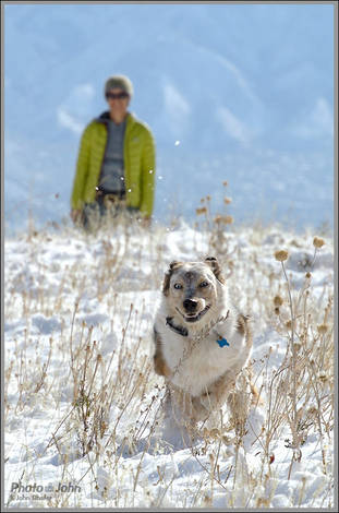 Nikon J1 Doggy Testing