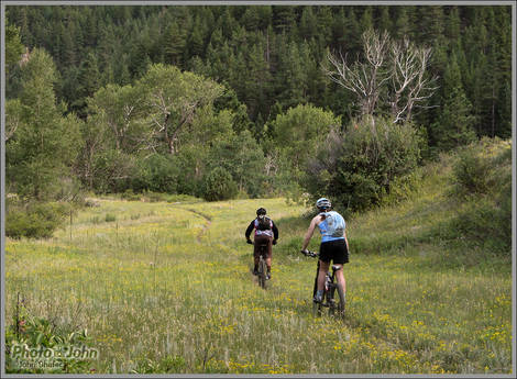 Colorado Wildflower Singletrack