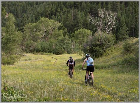 Colorado Wildflower Singletrack