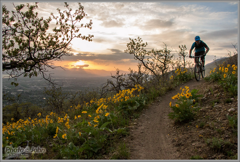 Utah Mountain Biking With Wildflowers & Sunset