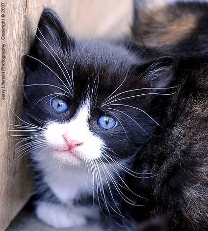 Kitten - 2007