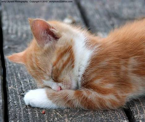 Just 10 more winks...