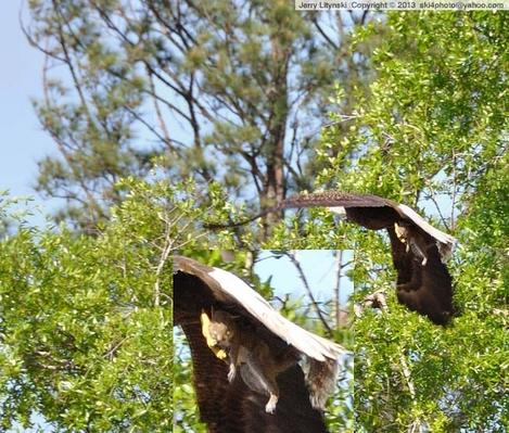 Strike Eagle ... or Flying Squirrel?