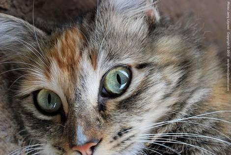 Bright eyes!