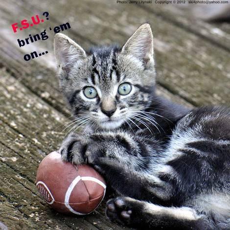 A football cat, ready for the season
