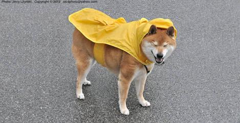 On a rainy day ... 2