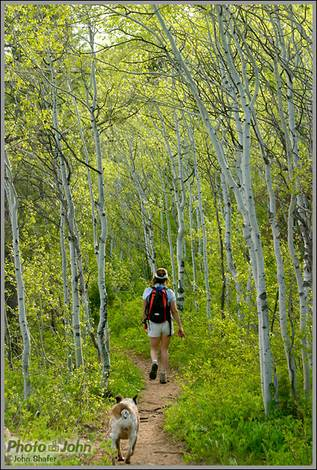 Aspens and the Uintah Mountains