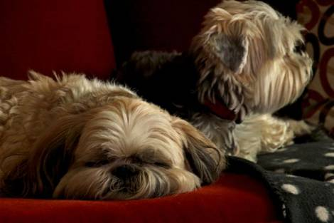 couch buddies
