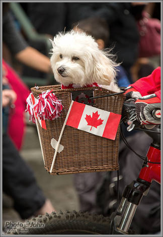 Doggies Love Canada Too!