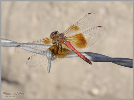 Dragon Fly Close-up - Sony HX50V