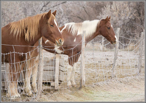 Horses - SLC Winter Morning