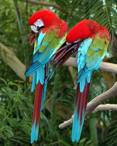 Colorful Pair