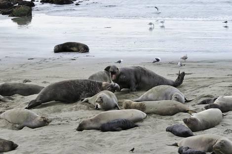 Elephant Seal Bluff
