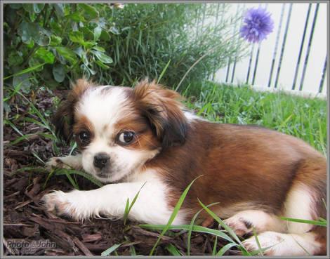 Puppy - Canon D20 Sample Photo