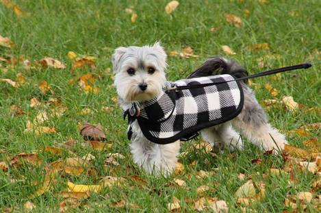 New Fall Coat c)