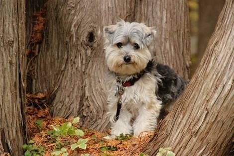 bark !!