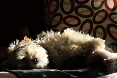 a nap in the sun