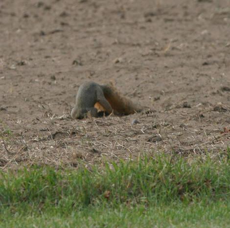 You seen my walnut?