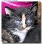 004-c_DSC_0238_Kitten4_sgc470.jpg