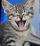 1_C_197_D90_VR55_Iso800_4May12_Kitten_Yawn_sgc698.jpg