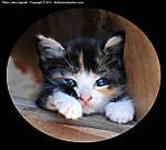 1_V_032_D60_VR85-mic_Iso800_24Apr11_CView_Kitten_sgc693.jpg