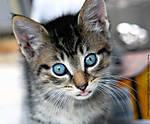 20_E_054_D60_VR85-mic_Iso1600_15Apr12_Kitten_sgc699.jpg