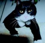 238896MaXXimus_the_cat_.JPG