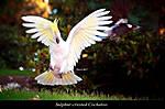 Birds2-2a.jpg
