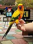 Colorful_Bird_adj.jpg
