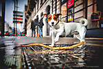 Dog11.jpg