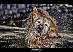 Dog2a1-Edit.jpg