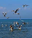 Gulls_1_f.jpg