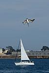 Pelican_Diving_ARC_1928_web_700h.jpg