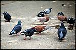 THE_BIRDS_a.jpg