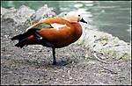 THE_BIRDS_g.jpg
