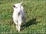 The_lamb_e.jpg