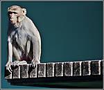 monkey_1.jpg