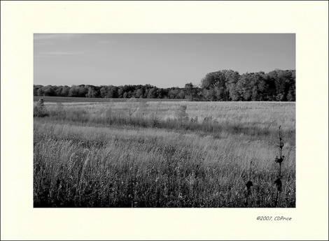Fall Series - grove creek