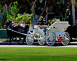 White_Carriage_DSCN0484.jpg