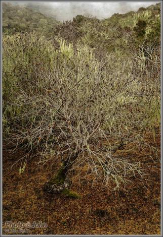 Bare Tree - Sony RX1